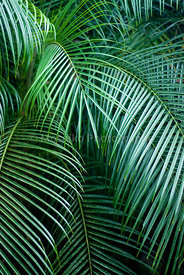 tropical_colors_18