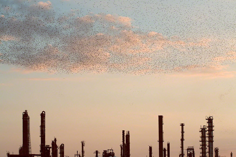 Refinery Flocks 10, 2006