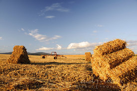 Hay bales stacked on a wheat field, thresher in background