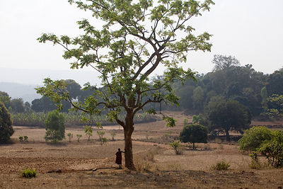 Gurubari Dantun stands in a field