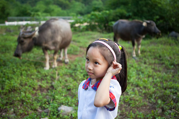 Fillette devant deux buffles, île de Cat Ba, Vietnam / Girl in front of two buffaloes, Cat Ba Island, Vietnam