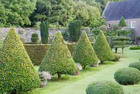 Parkhead. Hornbeam cones and box 'dumpling' shaped topiary. Parkhead, Roseneath, Helensburgh, Dumbartonshire, Scotland, UK