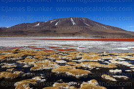 Bofedales on shore of Laguna Colorada and Cerro Chijlla volcano, Eduardo Avaroa Andean Fauna National Reserve, Bolivia