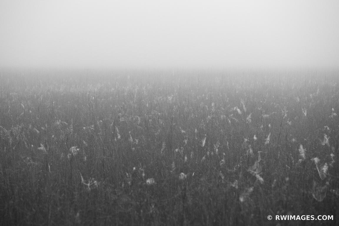 EVERGLADES PRAIRIE FOGGY MORNING BLACK AND WHITE
