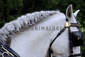 braided mane on a harness horse
