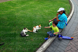 Boy playing with cat in Parque Kennedy, Miraflores, Lima, Peru