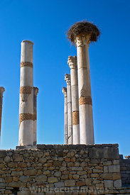The Capitol and a birds nest, Volubilis, Morocco; Vertical