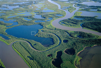 Aerial view of taiga forest, Mackenzie River delta, Yukon, Canada