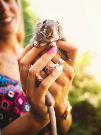 rat cupped in woman's hands