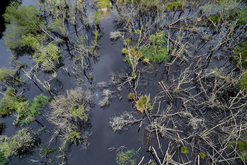 Aerial view overlooking wetland habitat created by European beavers (Castor fiber) in Dubh Loch as part of the Scottish Beave...