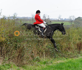 Jumping a hedge above Chadwell - The Belvoir Hunt at Scalford Hall 16-11-13