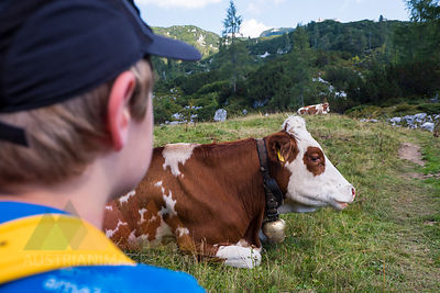 Austrian´, Ausseer Land, Boy watching cow on pasture