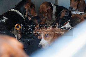 Albany and West Lodge Bassets in their trailer