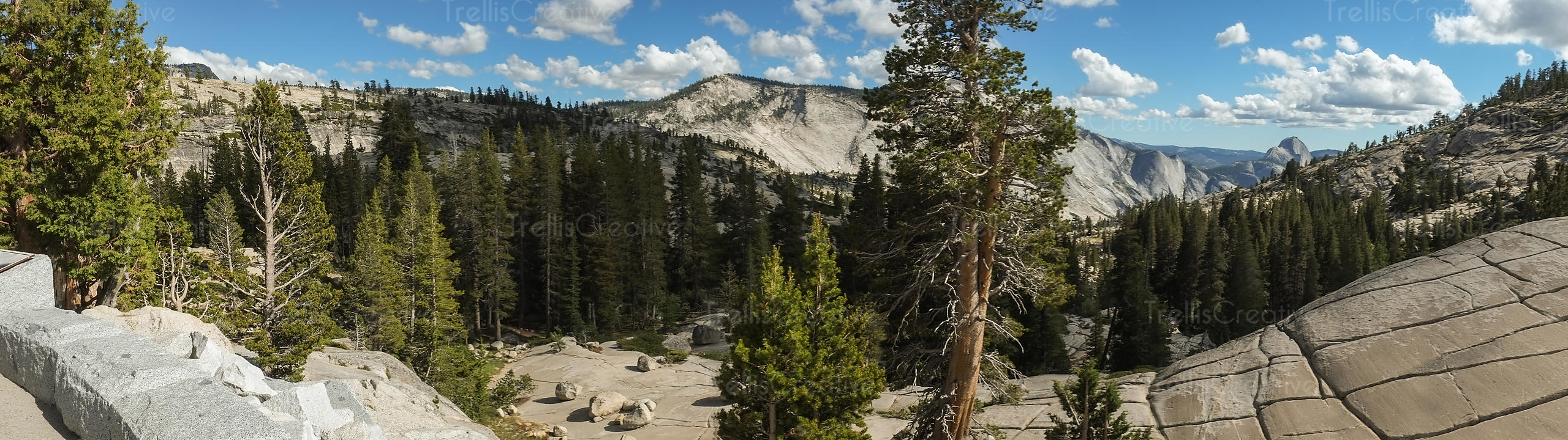 Panorama of the rocky mountains and trees in Yosemite National Park, USA