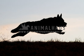 Silhouette of flying dog