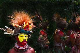 Huli Wigmen from the Tari Valley in the Southern Highlands of Papua New Guinea at a Sing-sing Mt Hagen Papua New Guinea.  Wea...