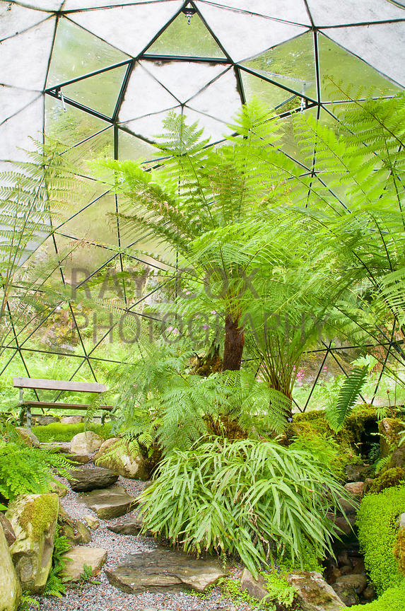 Tree ferns dominate the planting in geodesic dome fernery