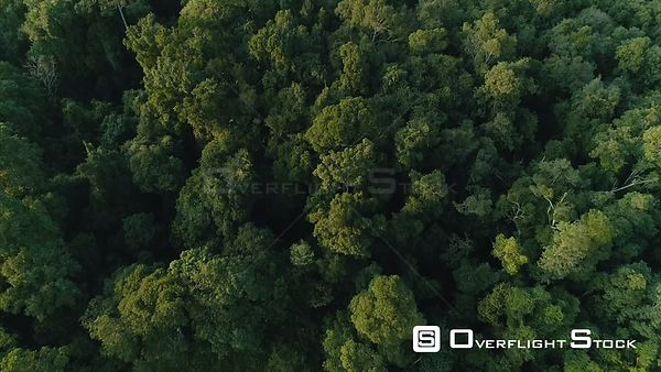 Top Down Drone Video of Khao Yai National Park Jungle Wilderness Thailand