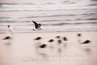 Motion blur - seagulls flying along beach at sunrise, clouds behind