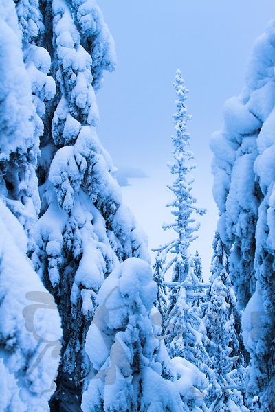 Snowy forest in Koli National Park