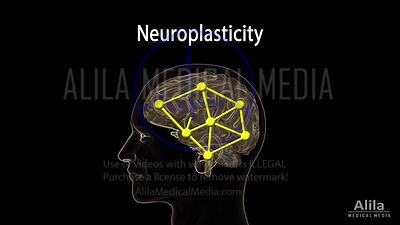 Neuroplasticity NARRATED animation