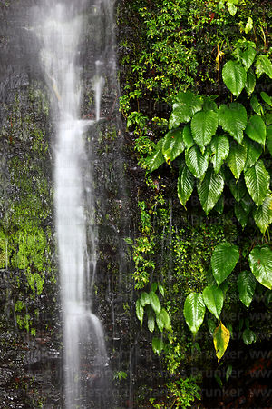 Waterfall and tropical vegetation near Coroico, North Yungas province, Bolivia