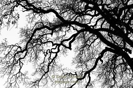 Tree Branches Abstract