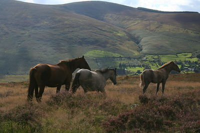 Three_horses_Dublin_mountains