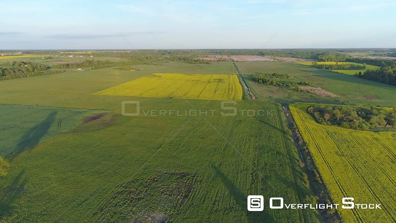 Aerial drone shot of rapeseed fields amongst green countryside