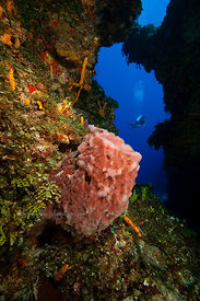 Underwater swimthru and sponges, Cozumel, Mexico