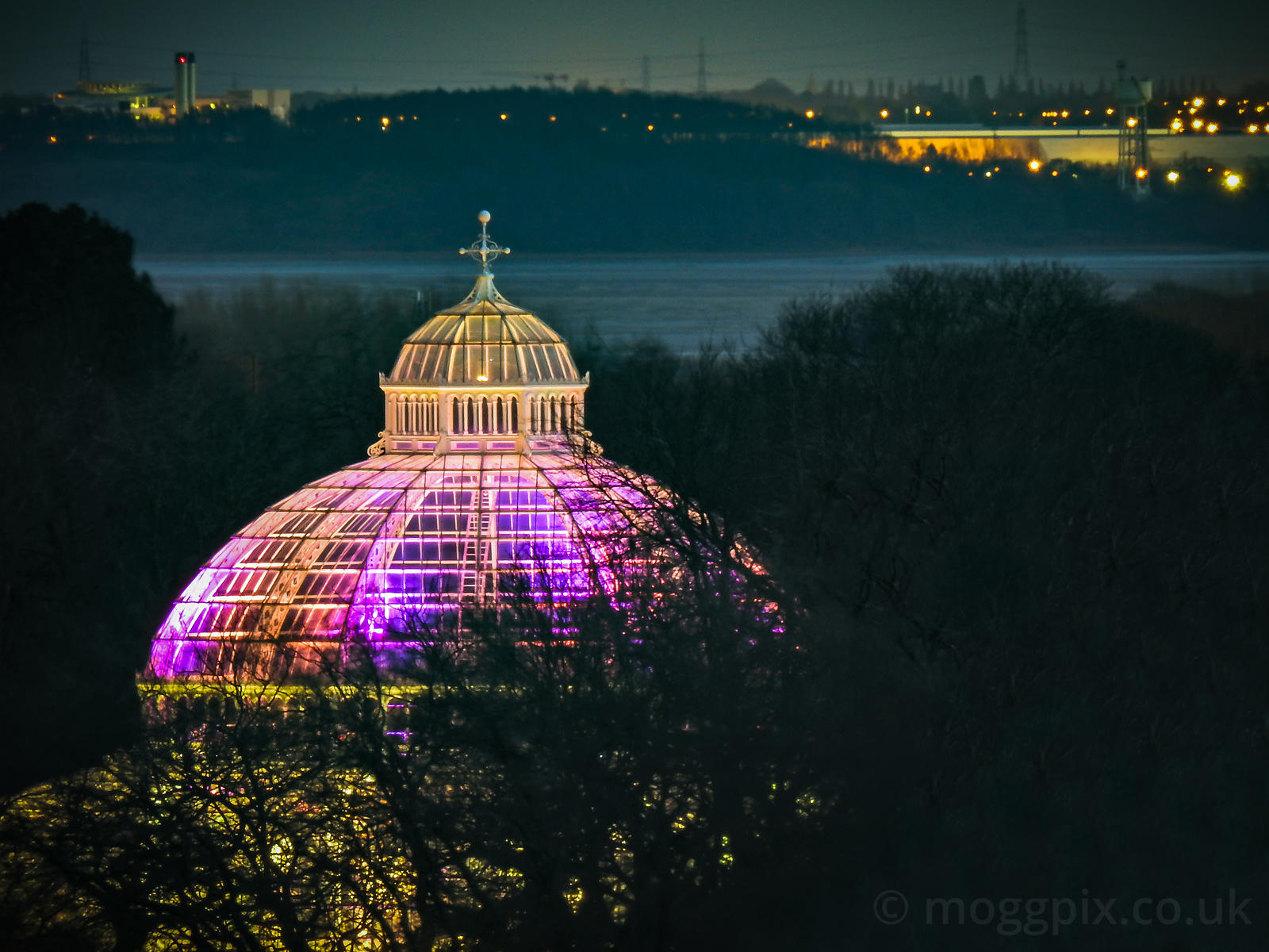 The Palm House at Night