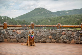 golden retreiver on cabin deck in front of mountain