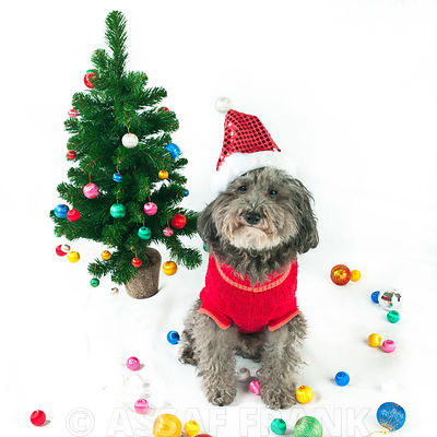Dog with Christmas tree and santa hat
