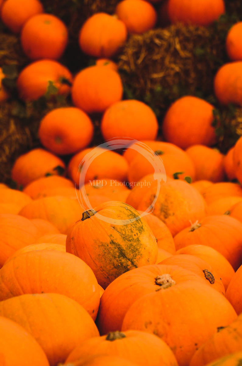 Tumbling pumpkins 1