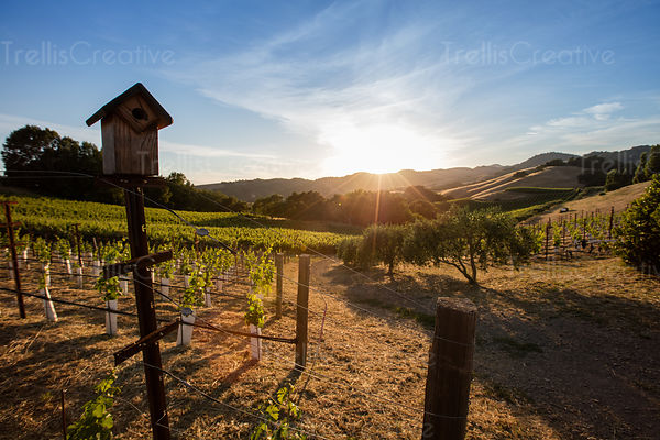 A wooden birdhouse in a vineyard at sunrise