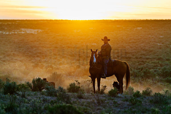 Cowboy on Horseback in Sage Brush Country