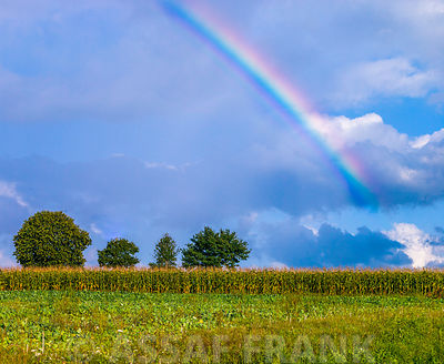 Rainbow above field