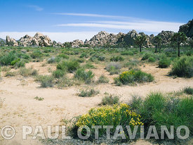 Joshua Tree Landscape 4 | Paul Ottaviano Photography