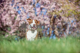 dog in grass with spring trees behind