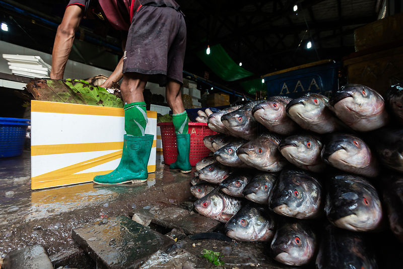 Worker Loading Farmed Fish into Boxes for Transport to Markets