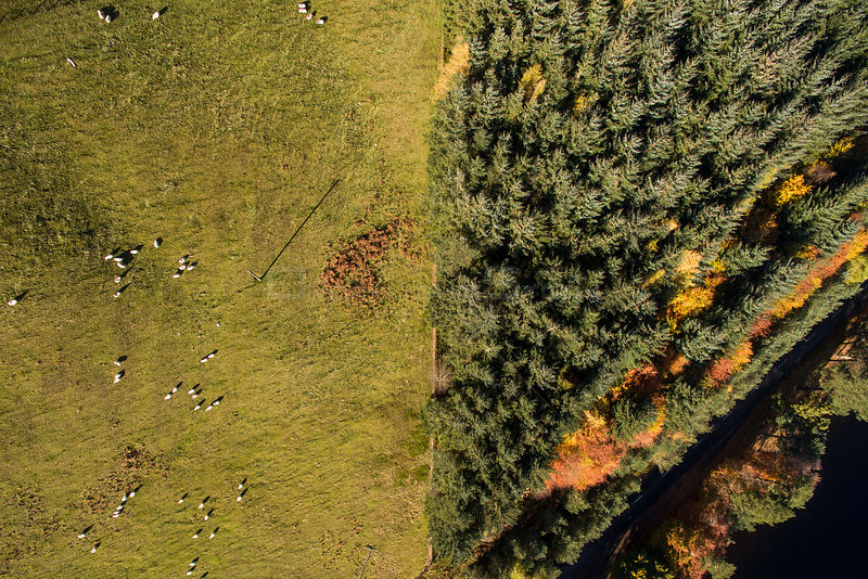 Aerial view of two different land uses in the Scottish Borders, sheep farming and commercial forestry, near St Mary's Loch, S...