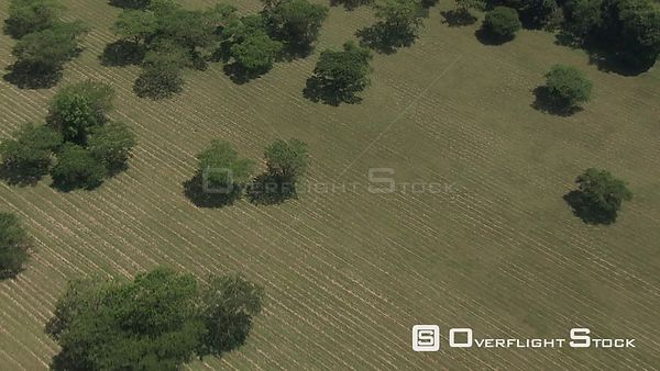 Aerial shot of a group of tree on cultivated land Nelspruit Mpumalanga South Africa