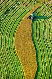 Aerial View of Rice Harvest #22