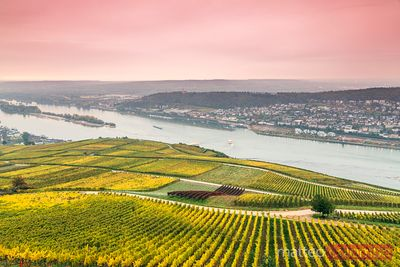 Sunrise over vineyards and river Rhine, Rudesheim, Germany