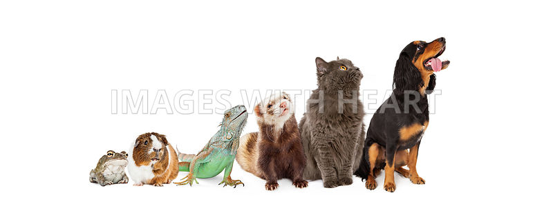 Group of Pets Looking Up and Side Banner