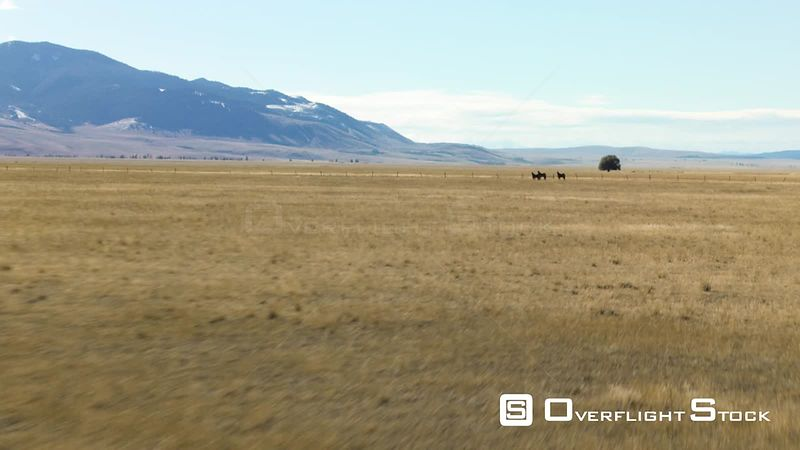 Three horses stand in the holden hay fields in the Madison valley, beneath the Gravelly mountains and Madison mountains in so...