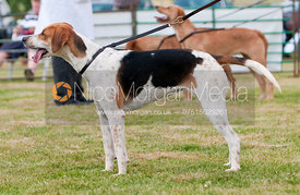 Single Unentered Bitch Class, Blaston Hound Show 2010