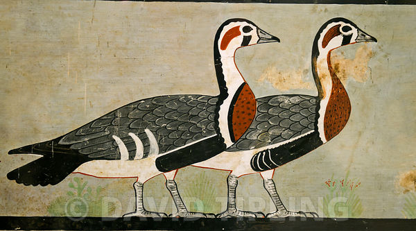 "Detail  (Red-breasted Geese) from the The ""Meidum geese,"" from the Tomb of Nefermaat and Atet, Old Kingdom, c.2620 BC (painte..."