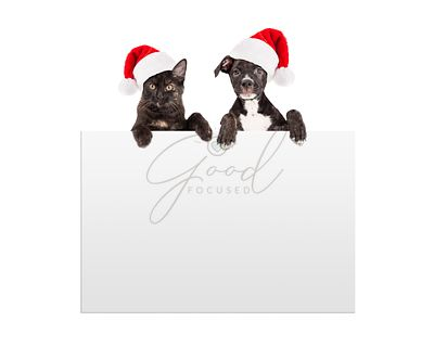Christmas Puppy and Kitten Hanging Over Sign