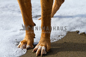 paws on bloodhound in sand and foam on beach